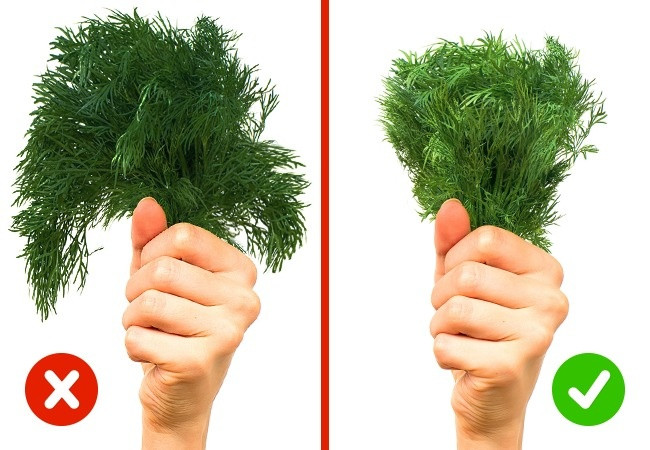 Các loại rau xanh lá tươi luôn có màu xanh lá cây tự nhiên.
