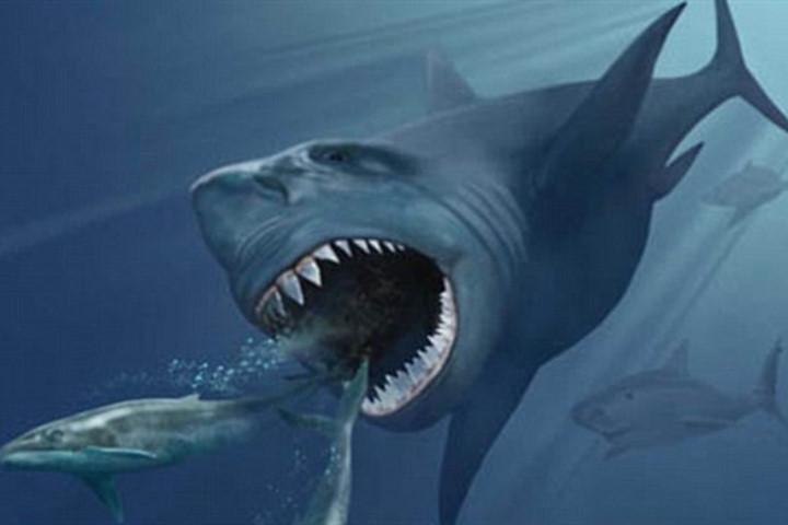 Hình ảnh về loài cá mập khổng lồ từng sống trên Trái Đất.