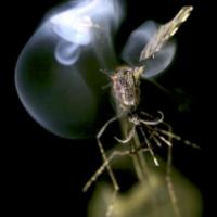 Hệ thống bắn tia laser diệt côn trùng gây hại trong nháy mắt