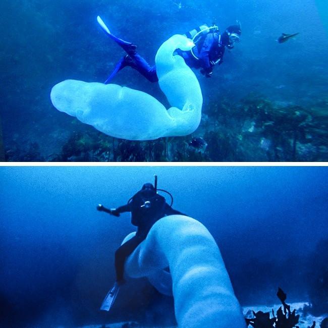 Sinh vật hiếm và kỳ dị nhất đại dương Pyrosome.