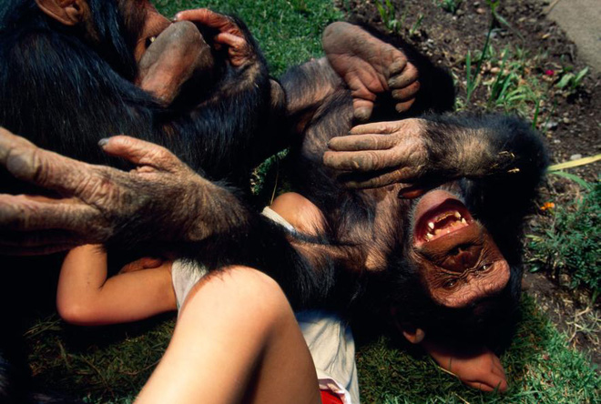 Loài linh trưởng đã trải qua 10-16 triệu năm để phát triển khả năng phát ra tiếng cười này
