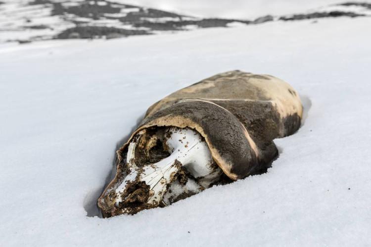 Trong thung lũng McMurdo, không hề có sự tồn tại cây cối, động vật.