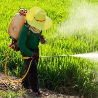 Video: Lịch sử phát minh và sử dụng thuốc trừ sâu