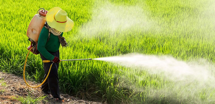 Thuốc trừ sâu giúp kiểm soát côn trùng nhưng lại ảnh hưởng đến sức khỏe con người.