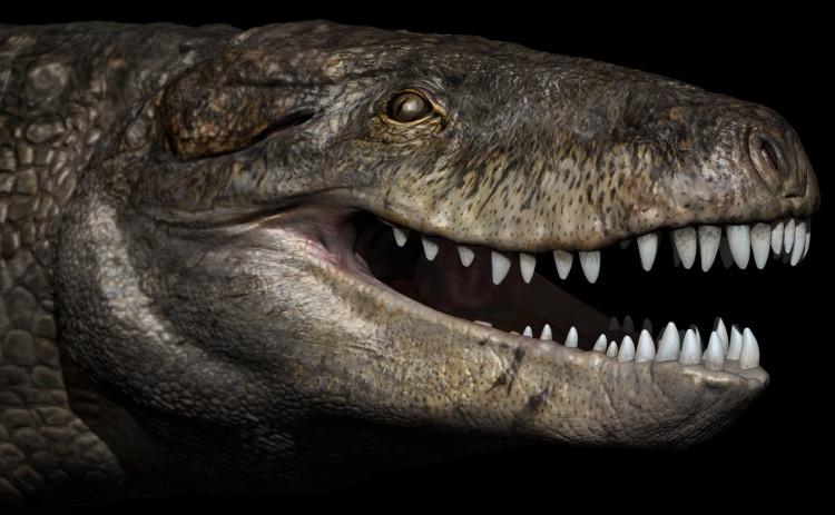 Cá sấu kỷ Jura có bộ hàm lớn với hàng răng sắc nhọn.