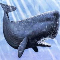 """Sự thật: Cá voi trong tiếng Anh được gọi là """"cá tinh trùng"""", vì sao thế?"""