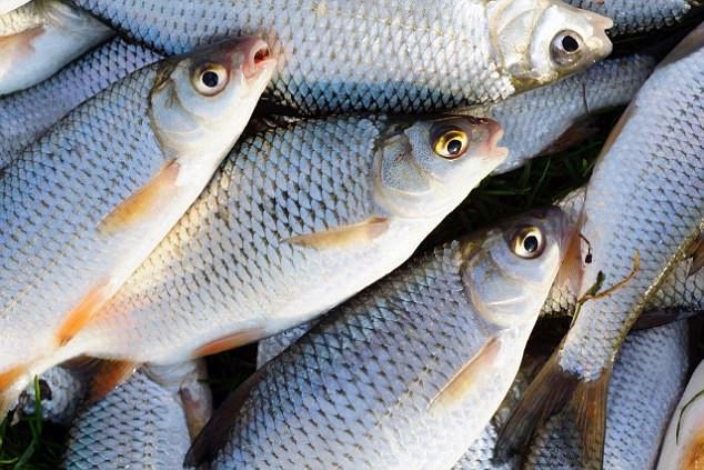 Cá rutilut bạc.
