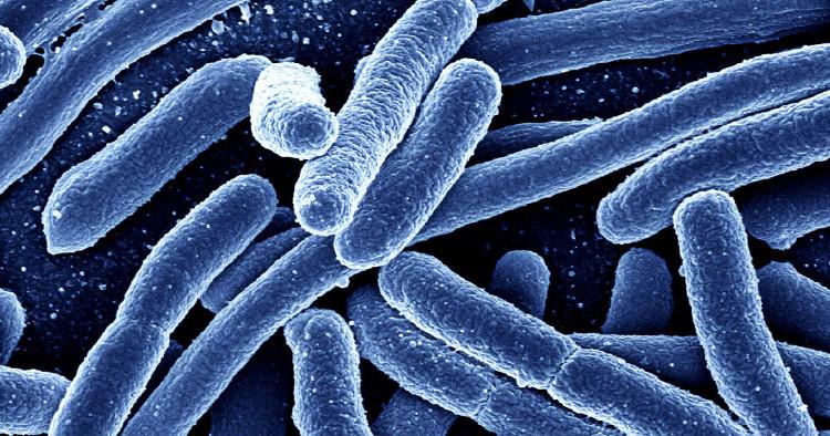 Hơn 90% vi khuẩn gram âm được tìm thấy trên ¾ chiếc xe đẩy trong các cửa hàng và siêu thị.