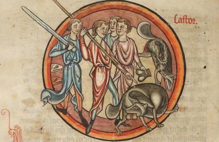 Phụ nữ Trung cổ tránh thai bằng cách sử dụng tinh hoàn loài chồn.