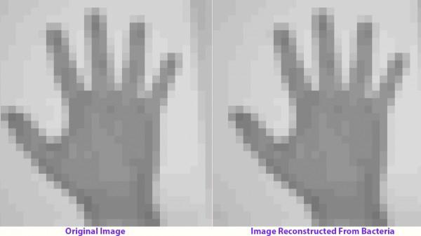 Bên trái là ảnh gốc, bên phải là ảnh tái tạo lại từ vi khuẩn.