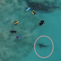 Cá mập mải mê săn mồi dưới chân nhóm học sinh Australia