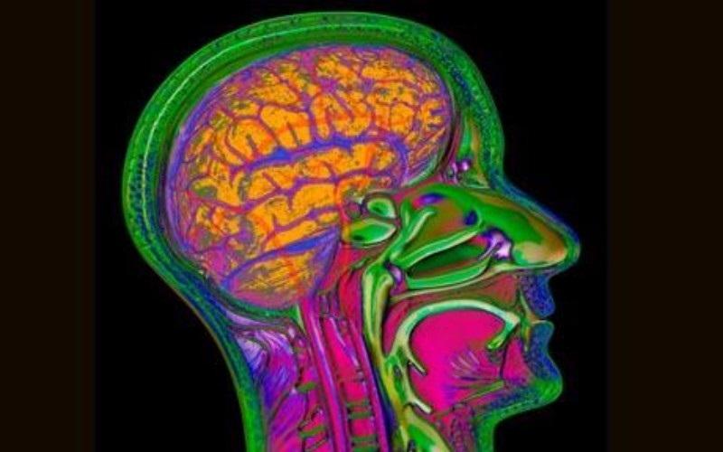 Ảnh nhiệt của não bộ