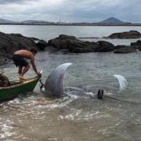 Cá đuối nặng hơn một tấn khiến ngư dân Brazil hoảng sợ