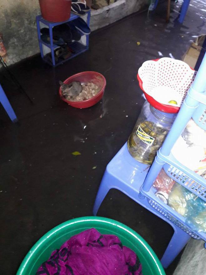 Mưa lớn khiến nước dâng cao, tràn vào nhà dân tại khu vực Mĩ Đình.