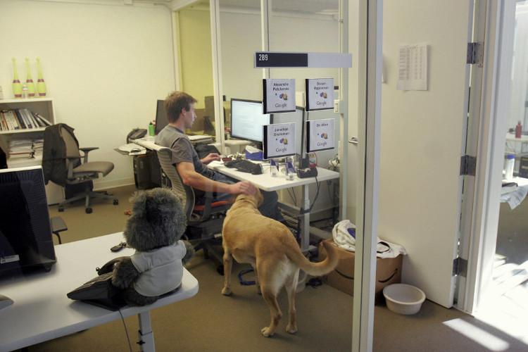 Chú chó quẫy đuôi hạnh phúc trong văn phòng Google Mountain View.
