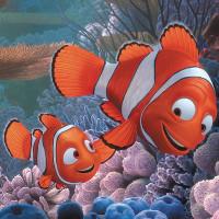 """Sự thật về """"Finding Nemo"""": Cá bố Marlin sẽ """"chuyển giới"""" ngay sau khi cá mẹ qua đời"""