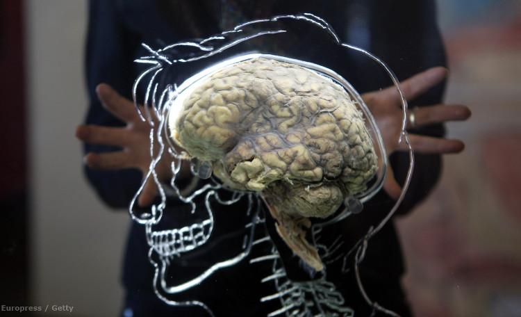 Các nhà khoa học hi vọng sẽ đạt được kết quả khả quan tương tự khi thử nghiệm trên người