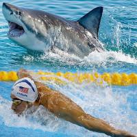 Đặc điểm giúp cá mập trắng đánh bại kình ngư Michael Phelps