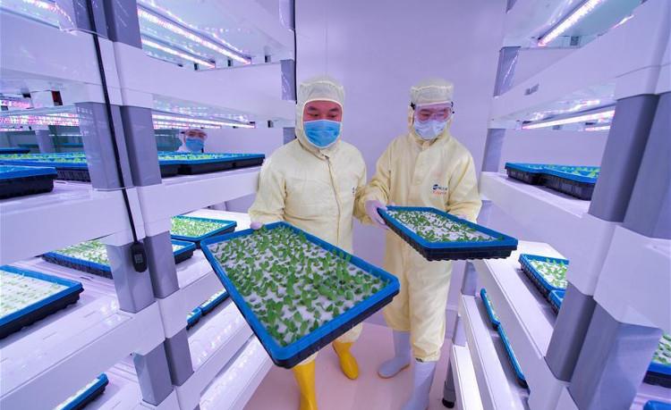 Tiền thưởng cao có thể làm giảm chất lượng nhiều công trình nghiên cứu ở Trung Quốc.