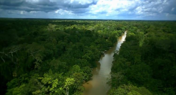 Chính sự thoát hơi nước của lá cây tạo ra sự khởi đầu của mùa mưa.