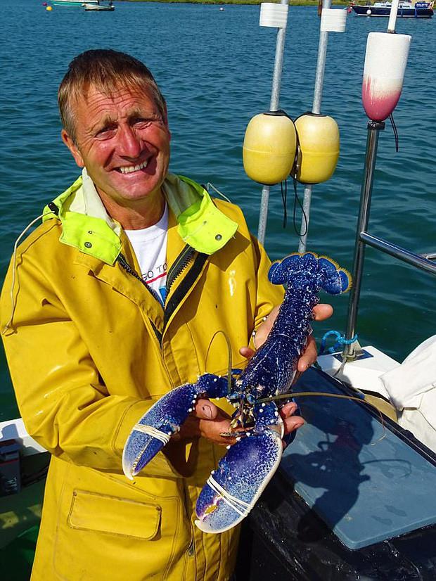 Ông Gary đã vô cùng may mắn khi bắt được con tôm hùm xanh quý hiếm này.