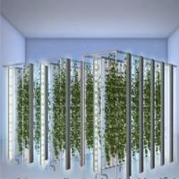 Video: Trang trại trồng rau thẳng đứng năng suất cao ở Mỹ