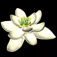 Tổ tiên của loài hoa là thực vật lưỡng tính