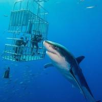 Những sát thủ cá mập nguy hiểm nhất dưới lòng đại dương