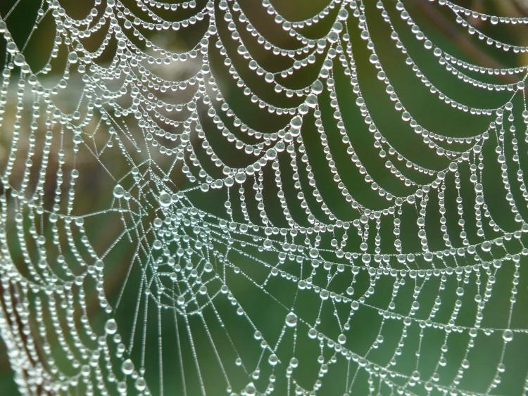 Tơ nhện mạnh mẽ hơn thép và cứng hơn cả Kevlar