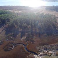 """""""Rừng ma"""" lan nhanh tại Bắc Mỹ do biến đổi khí hậu"""