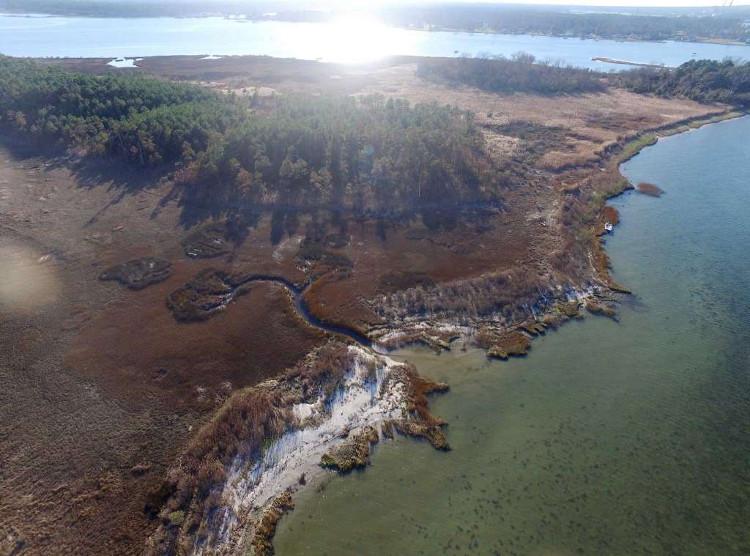 Thủy triều tháng 10/2015 giết chết nhiều cây thông gần Yorktown, Virginia.