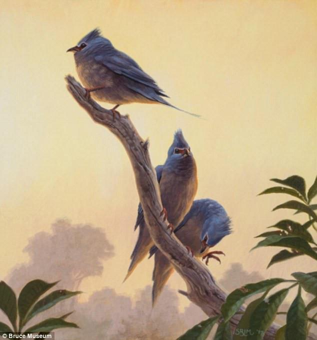 Ảnh vẽ bộ chim chuột mà hóa thạch của chúng vừa được các nhà khoa học tìm thấy