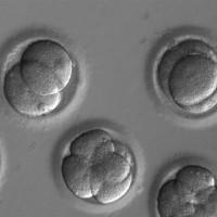 Lần đầu thành công trong thử nghiệm công nghệ chỉnh sửa gene