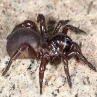 Loài nhện có khả năng kinh dị mà giờ khoa học mới phát hiện ra