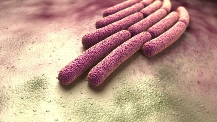 Đây là nhóm vi khuẩn gồm 4 loại vi khuẩn khác nhau gây ra 500.000 ca tiêu chảy ở Mỹ mỗi năm.