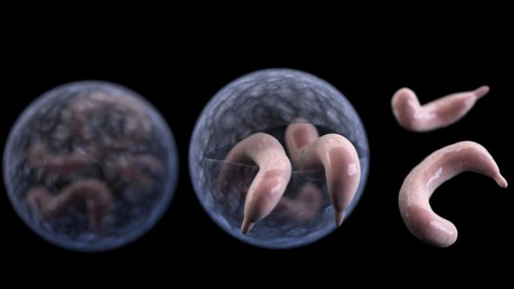 Vi khuẩn này sẽ lây lan nếu con người lỡ nuốt 1 cái gì đó tiếp xúc với chất thải của người bệnh.
