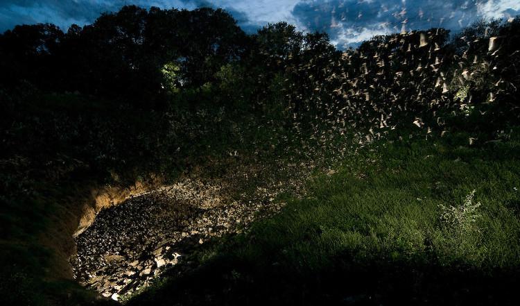 Hàng triệu con dơi đang bay ra khỏi hang Bracken, Texas, Mỹ.
