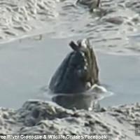 Sinh vật lạ thập thò đầu trên sông Australia