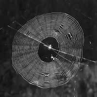 Xem loài nhện giăng tơ, bạn sẽ phải công nhận đây là một kiến trúc sư đại tài của thế giới động vật