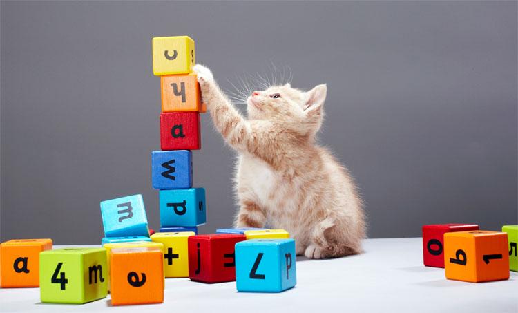 Một số động vật có khả năng đếm và thực hiện phép tính.