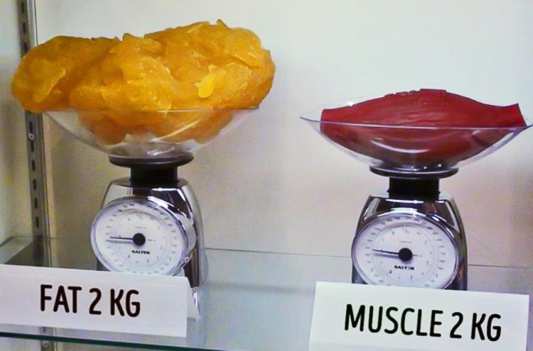 Cân ở đây đề cập đến là cân nặng của cơ bắp.