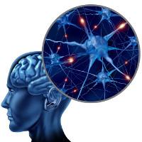 Phát hiện tế bào não mới