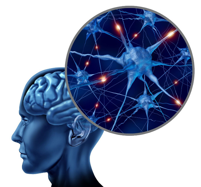 Phát hiện tế bào não mới.