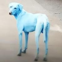 Chó chuyển màu xanh sau khi uống và tắm sông ô nhiễm Ấn Độ