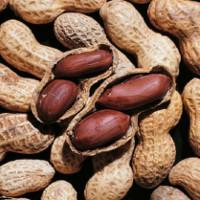 Nghiên cứu đột phá trong điều trị tình trạng dị ứng đậu phộng