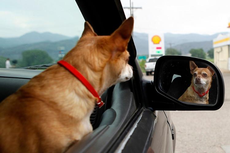 Loài chó có thể nhận diện được mùi hơn là hình ảnh của chúng