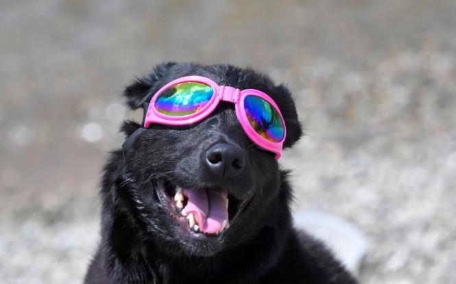 Một chú chó tham gia quan sát hiện tượng lạ lẫm với nó