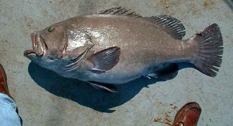 Con cá đã khiến các ngư dân ngỡ ngàng.