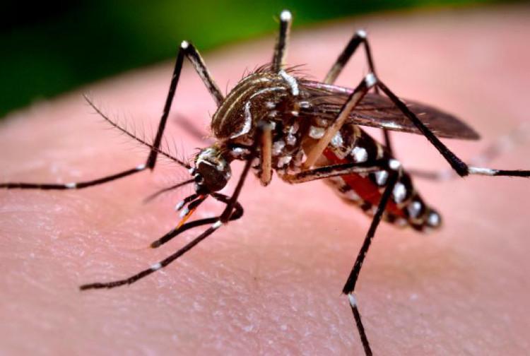 Muỗi hoạt động mạnh nhất lúc sáng sớm và chiều tối.