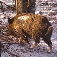 Video: Thế giới tự nhiên quanh gốc sồi trong một năm